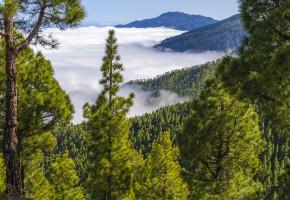 La Palma Skog Vandramera - Vandringsresor