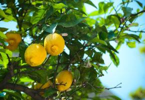 Sardinien, Citronväxt Vandramera - Vandringsresor