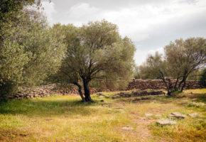 Sardinien, Vacker växtlighet Vandramera - Vandringsresor
