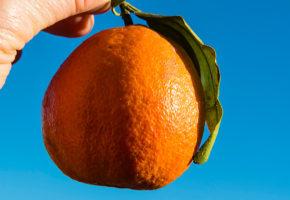 Apelsin, Marocko Vandramera - Vandringsresor