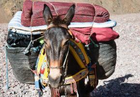 Åsna, Marocko Vandramera - Vandringsresor