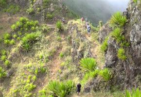 Kap Verde Växter Vandramera - Vandringsresor