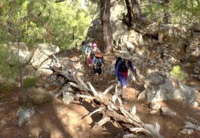 Kreta Vandrar i skogen Vandramera - Vandringsresor